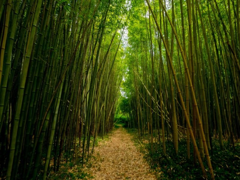 Sustainable bamboo packaging solutions