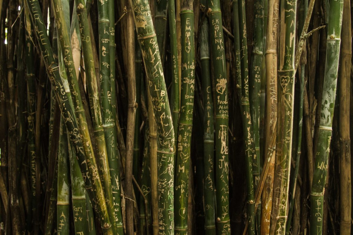 Bamboo for bamboo packaging